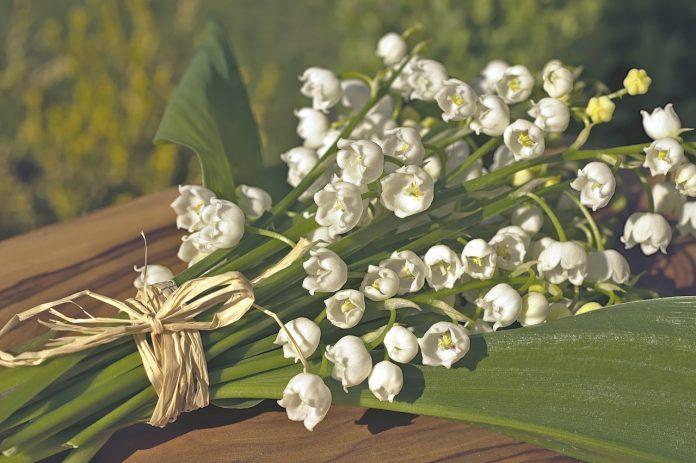 הפרח המאחר לבוא הוא היפה מבין פרחי הגן